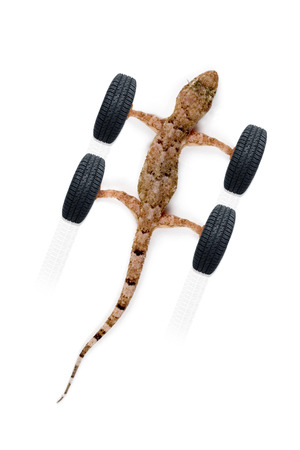 Adhere new tires - Gecko and tires on white background photo
