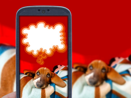 fed up: Smartphone application and basset hound puppy tired of taking photo of him.