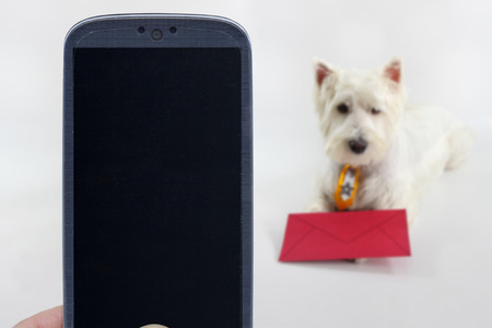 westie: Smatrphone and a Westie dog on blurred background. Idea for pet shop app photos of dogs veterinarian email applications and others.