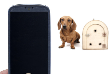 canine: Smartphone dachshund dog and transport cage. Idea for delivery applications Canine Pet shop messages veterinarians Social Apps dog and others