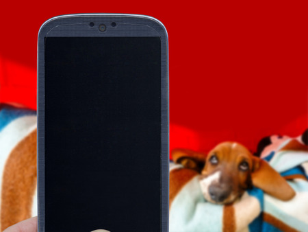 fed up: Smatrphone and basset hound on blurred background. Idea for pet shop app photos of dogs veterinarian applications and others.