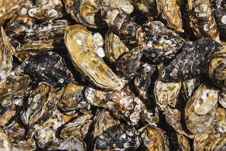 oyster shell: Oyster shell background  texture