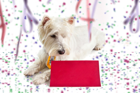 post card: west highland white terrier on Carnival background looking at red post card.
