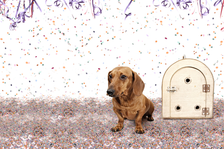 left behind: Dachshund at Carnival Party time theme