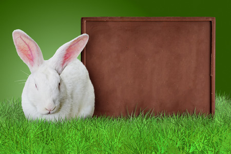 green background: White rabbit and chocolate bar as a board on grass on green background Stock Photo
