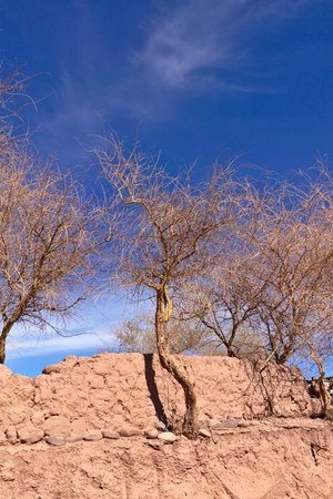 adobe wall: Dead trees on clay ground. Stock Photo