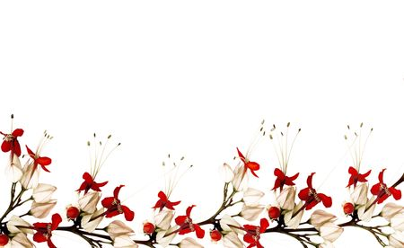 red and black butterfly flower border with copy space Stock Photo