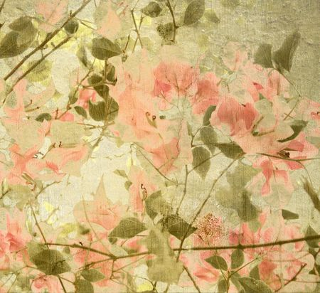 Peach and olive Bouganvillea textured background  Stock Photo