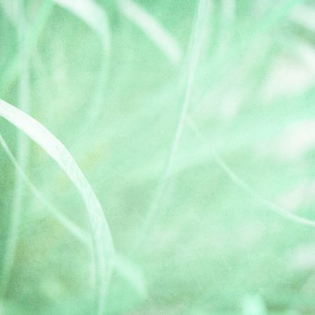 Misty green grass abstract on paper textured background with copy space photo