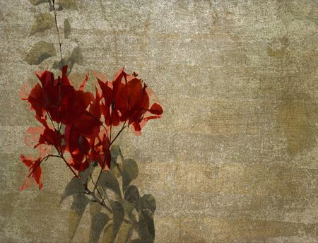bougainvillea flowers: Red bougainvillea on textured cloudy plaster background Stock Photo