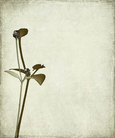 Long stem and seed head on grunge background photo