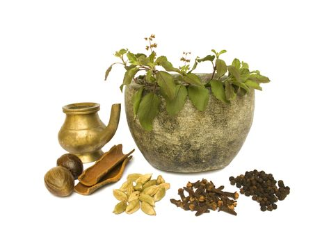 tulasi: Holy Basil Tulasi in stone bowl with spices and oil isolated