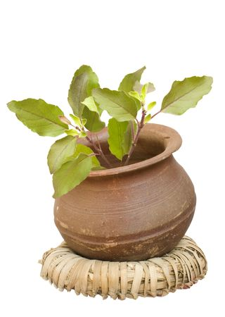 holy basil/tulasi in a clay pot on a wicker ring Stock Photo - 6587030