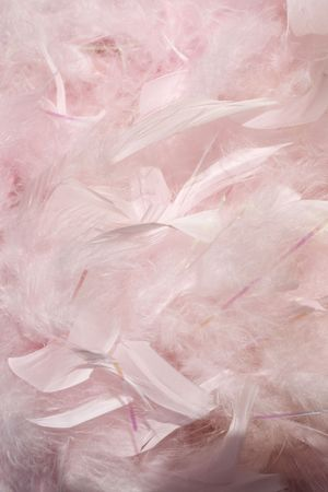 Fluffy pink feathers in sunlight textured background photo