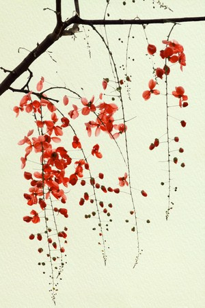 Branch of Red Blossom on Handmade Paper photo