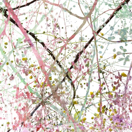 Grunge Blossom Abstract photo