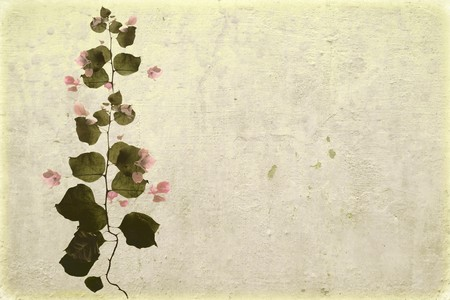 Bougainvillea on white washed plaster with copy space photo