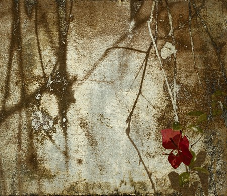 shadowy: Dark shadowy bougainvillea and branches on grunge wall background Stock Photo