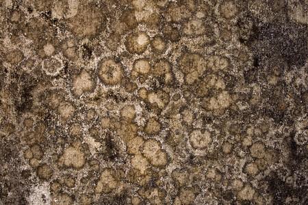 Globular mold wall background  photo