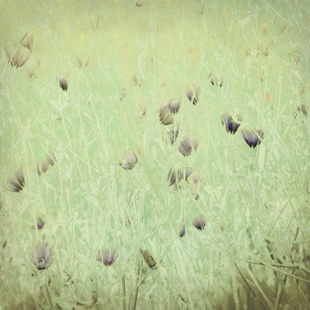 Pale wildflower print on antique paper textured background Stock Photo - 7808220