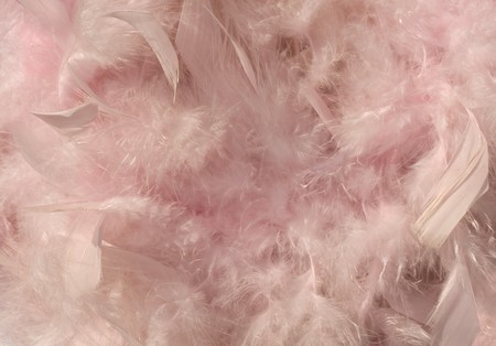 Fluffy pink sunlit feather background with text space photo