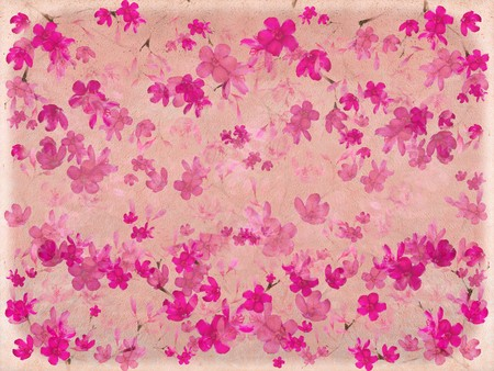 Pink blossom flower on parchment with banner or text space photo