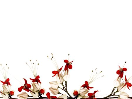 Red black and white butterfly flower border  photo