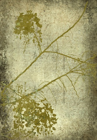 Grunge olive blossom branch print textured background Stock Photo - 8416981