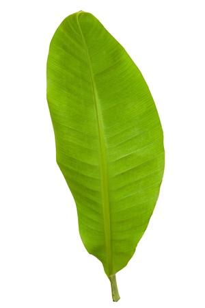 banana leaf: Nueva hoja de banana verde aislada con 2 de trazado de recorte