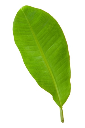 Fresh Green Banana Leaf Isolated with Clipping Path 3