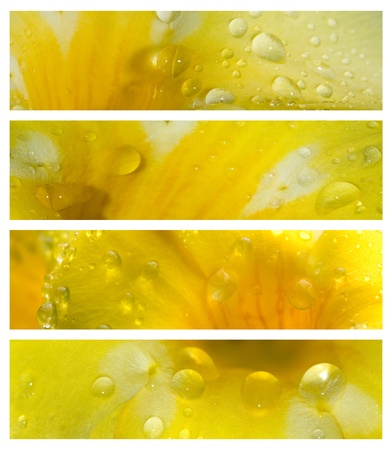 waterdrops: Waterdrops on Petals Banner Set with Text Space