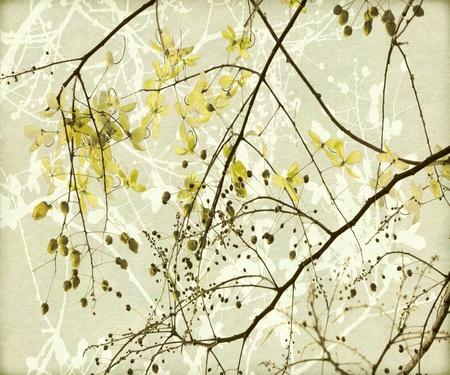 fistula: Tangled Golden Shower Tree Art Print on Antique Paper Stock Photo