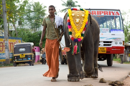 kerala culture: KERALA - APRIL 9: A young mahout leads a baby elephant to a temple festival on April 9, 2010 in Kerala, India. Elephants have been domesticated in India for over 3,500 years and each one forms a special bond with its mahout.