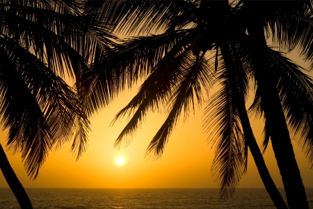 Image of a Tropical Palm Tree Sunset Background Stock Photo