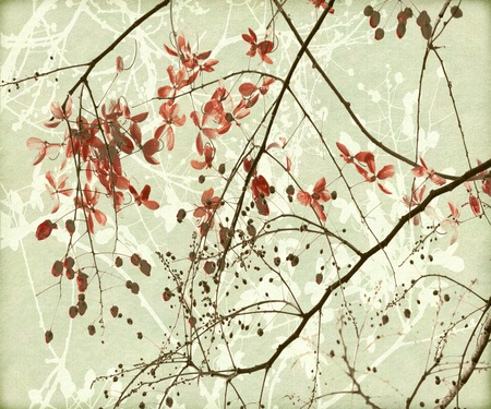 canvas print: Tangled Branch and Red Blossom Print on Paper