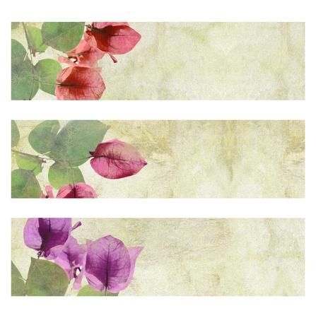 bougainvillea flowers: Flower Artwork on Cracked Plaster Banner Set isolated
