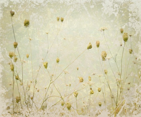 pale cream: Grunge Pale Meadow Flower Art Textured Background Stock Photo
