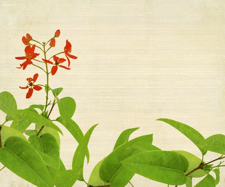 Red Flower And Foliage on Bamboo Textured Background photo