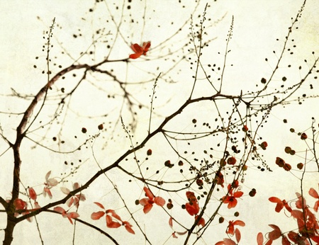 fistula: Black Branches and Stark Red Flowers on Paper Art Background Stock Photo