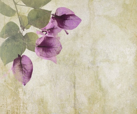 pale cream: Bougainvillea artwork on cracked plaster textured background