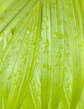 lush tropical palm leaf with rain drops background photo