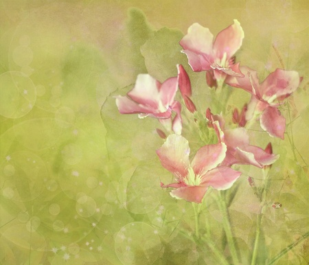 digital   painting: Pink Flower Garden Digital Painting Textured Background Stock Photo