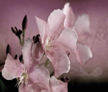 Oleander Flower Art Digital Painting textured Background