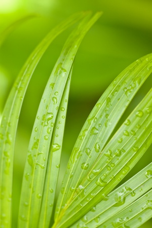 Tropical Palm Leaves and Rain Drops Background photo
