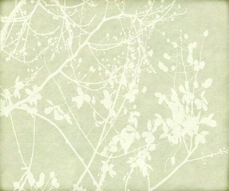simple border: Blossom and Tangled Branch Print on Paper Background Stock Photo
