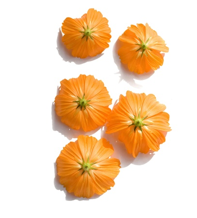 five objects: Sunny Orange Upturned Flowers  Stock Photo