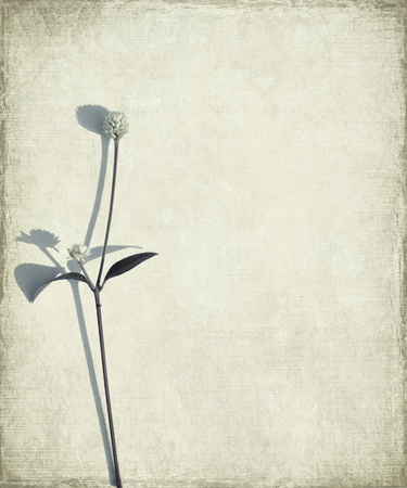 worn paper: Blue Long Stem and Seed Head on Grunge Background 2