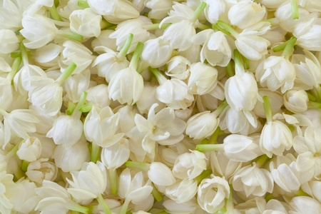 Image of Fresh Jasmine Flower Background photo
