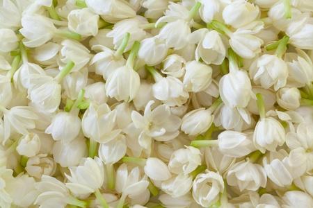 flores exoticas: Imagen de fondo fresca flor de jazm�n Foto de archivo