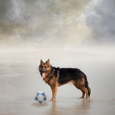 Dog Waits for His Friend to Play Football with Him photo